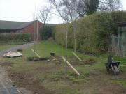 Mountain Ash & gorse planting