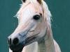Sue Pyke 1 Oct horse-1
