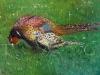 Pam Evans - pheasant