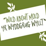 wild-about-mold-logo