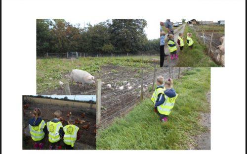Farm #2